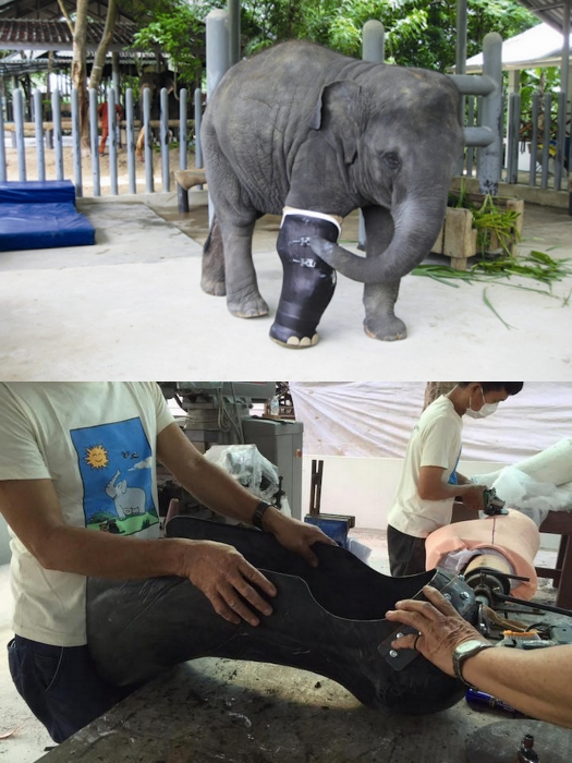 Elephant wounded by land mine gets prosthetic leg