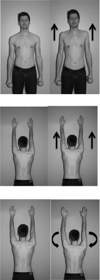 How do shrug-exercises affect the medial scapular muscles?