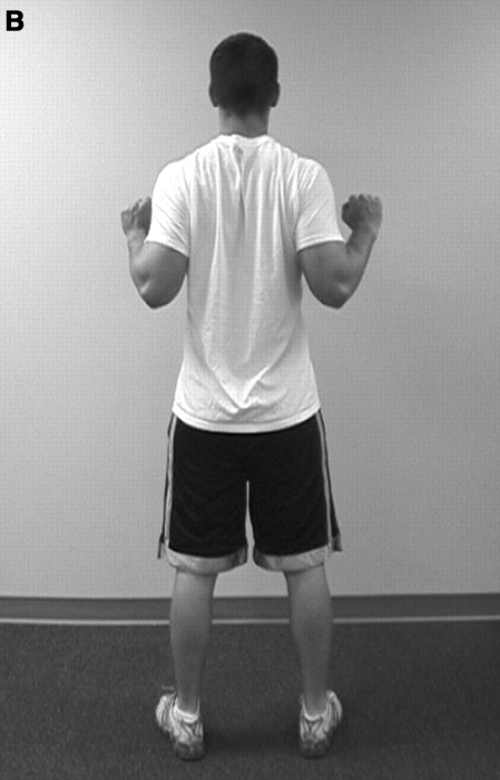 Scapular muscle-activation ratios during shoulder exercises
