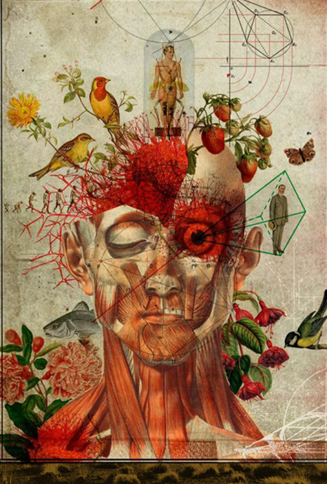 Retro anatomy collages by Diego Max