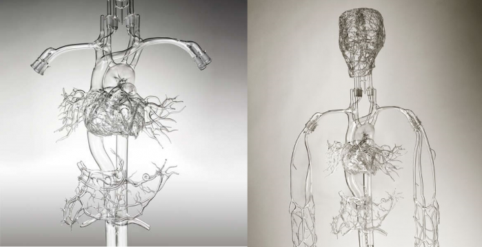 Highly detailed handmade anatomic glass models