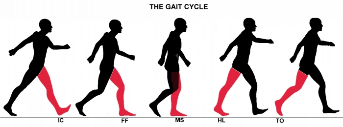 Postural dependence of locomotion during gait initiation