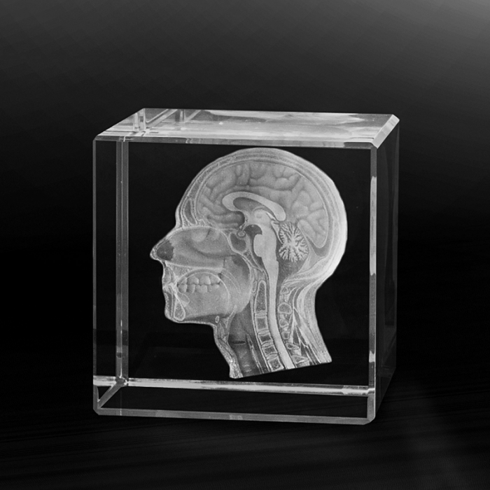 3-D laser engraved anatomy by the Grüner Laser company
