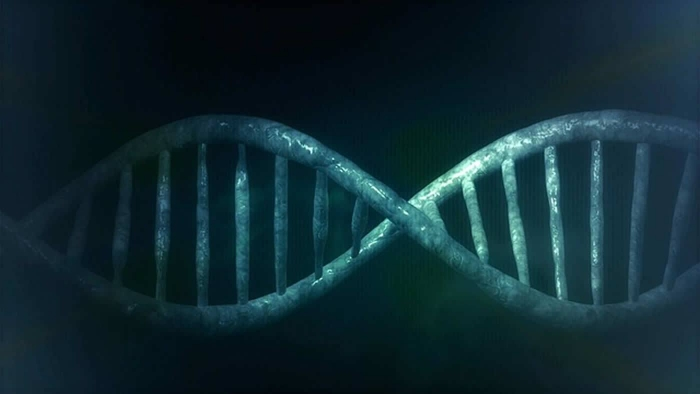Genetics and the placebo effect: the placebome
