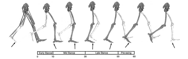 Resting foot posture and its effects on gait kinematics