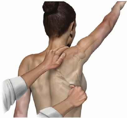 How reliable are tests that assess scapular dyskinesis?