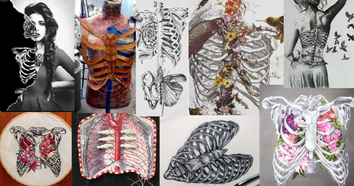 The ribcage in anatomical art