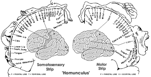 Visual similarity and memory in body model distortions