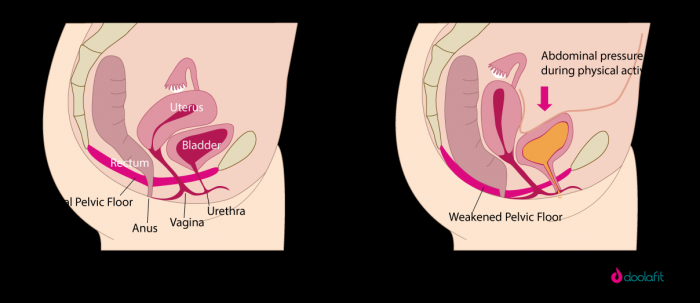 Education and women's pelvic floor muscle function